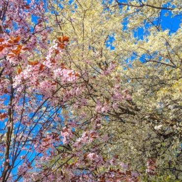 #RunningCulture: wallpapere cu primăvara văzută în alergare. DE VIS!